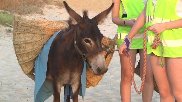 Los burros limpiacostas ayudan a los voluntarios a limpiar el plástico de las playas en España - Sputnik Mundo