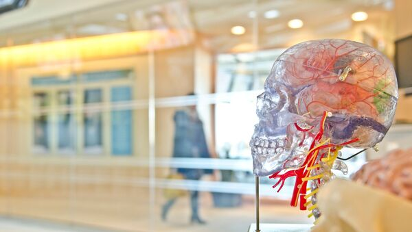 El modelo transparente del cerebro - Sputnik Mundo