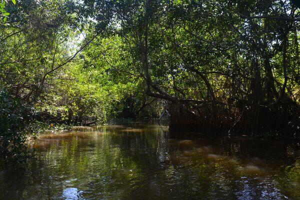 Manglar Reserva de la Biosfera Pantanos de Centla, México. - Sputnik Mundo