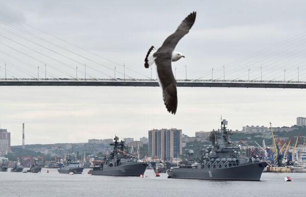 Чайка во время празднования Дня Военно-морского флота во Владивостоке - Sputnik Mundo