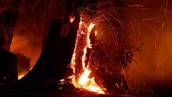 Incendios forestales en California - Sputnik Mundo