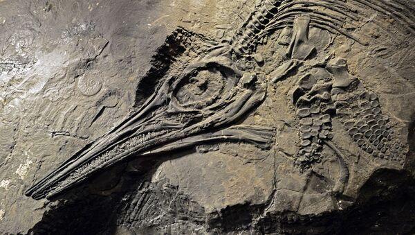 El esqueleto de un ictiosaurio (Archivo) - Sputnik Mundo