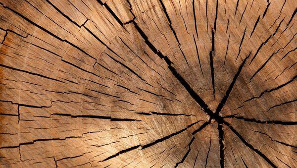 Un tronco de madera - Sputnik Mundo