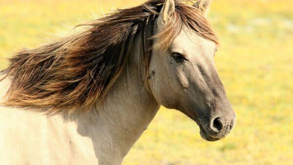 Un caballo, referencial - Sputnik Mundo