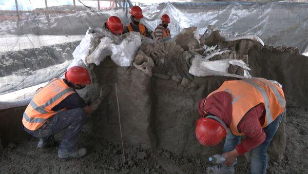 Hallan más de 8.000 huesos de mamuts en las obras de un aeropuerto de Ciudad de México - Sputnik Mundo