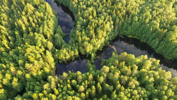 Un bosque en Rusia - Sputnik Mundo