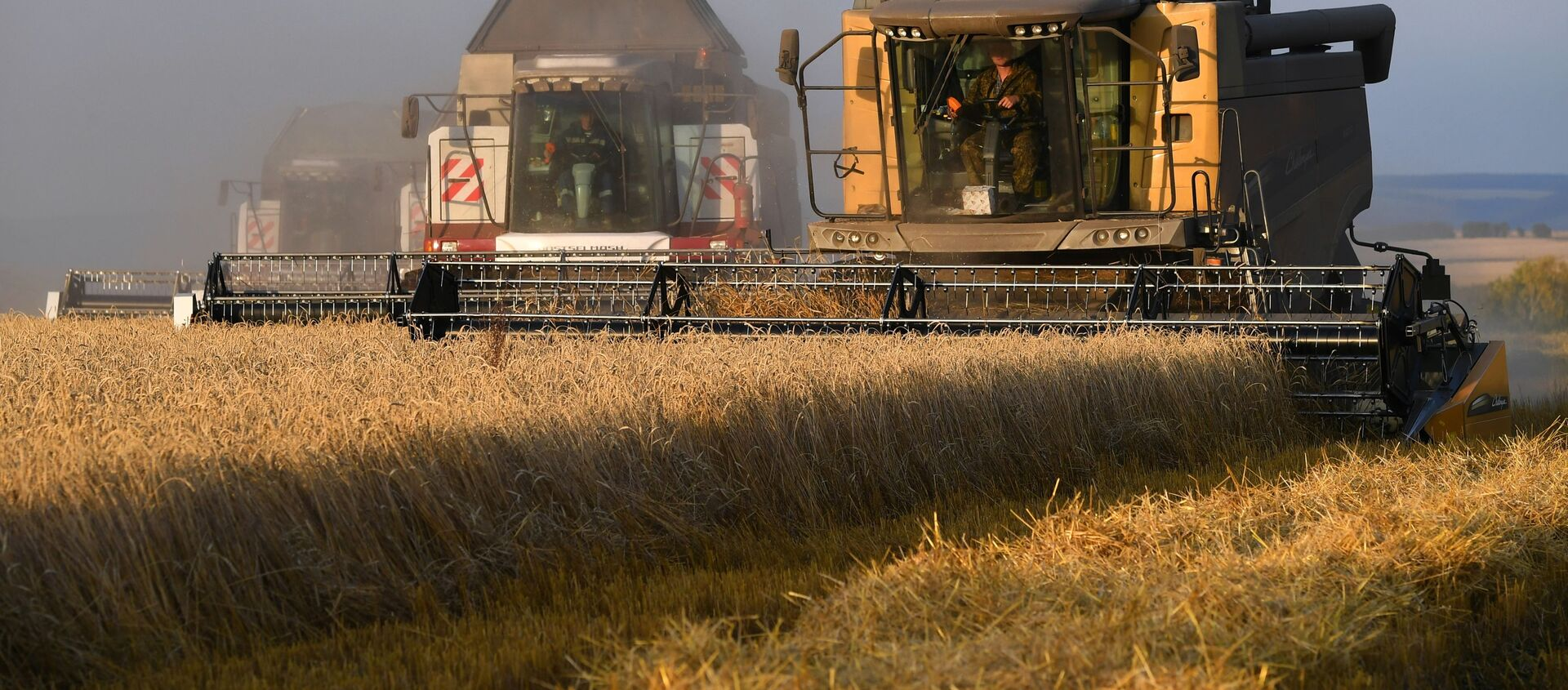 La cosecha de trigo en Rusia - Sputnik Mundo, 1920, 27.11.2020