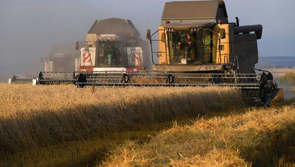 La cosecha de trigo en Rusia - Sputnik Mundo