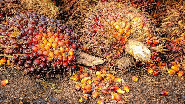 Las semillas de palma de las que se produce el aceite - Sputnik Mundo