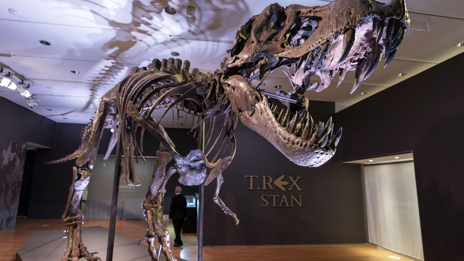 El esqueleto del dinosaurio T-Rex apodado Stan - Sputnik Mundo, 1920, 28.09.2021