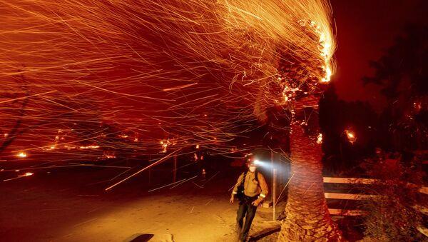 Пожарный проходит мимо горящего дерева во время тушения пожара в общине Сильверадо в Калифорнии - Sputnik Mundo
