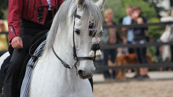 caballo andaluz PRE - Sputnik Mundo