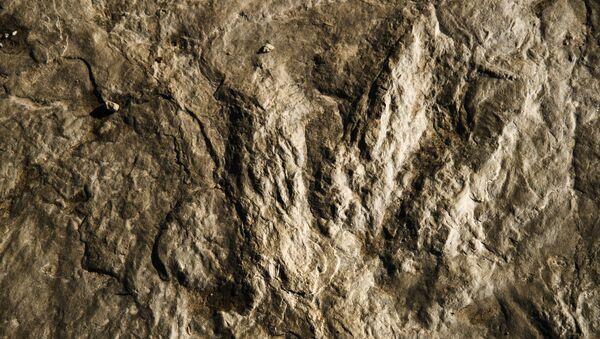 La huella fosilizada de un dinosaurio - Sputnik Mundo