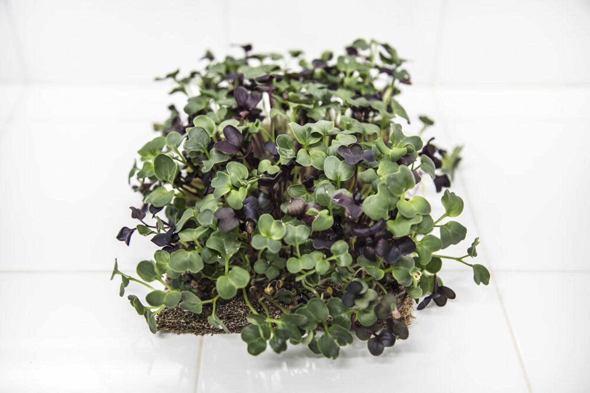 Ekonoke también vende micro greens, las primeras hojitas de la semilla - Sputnik Mundo, 1920, 11.02.2021