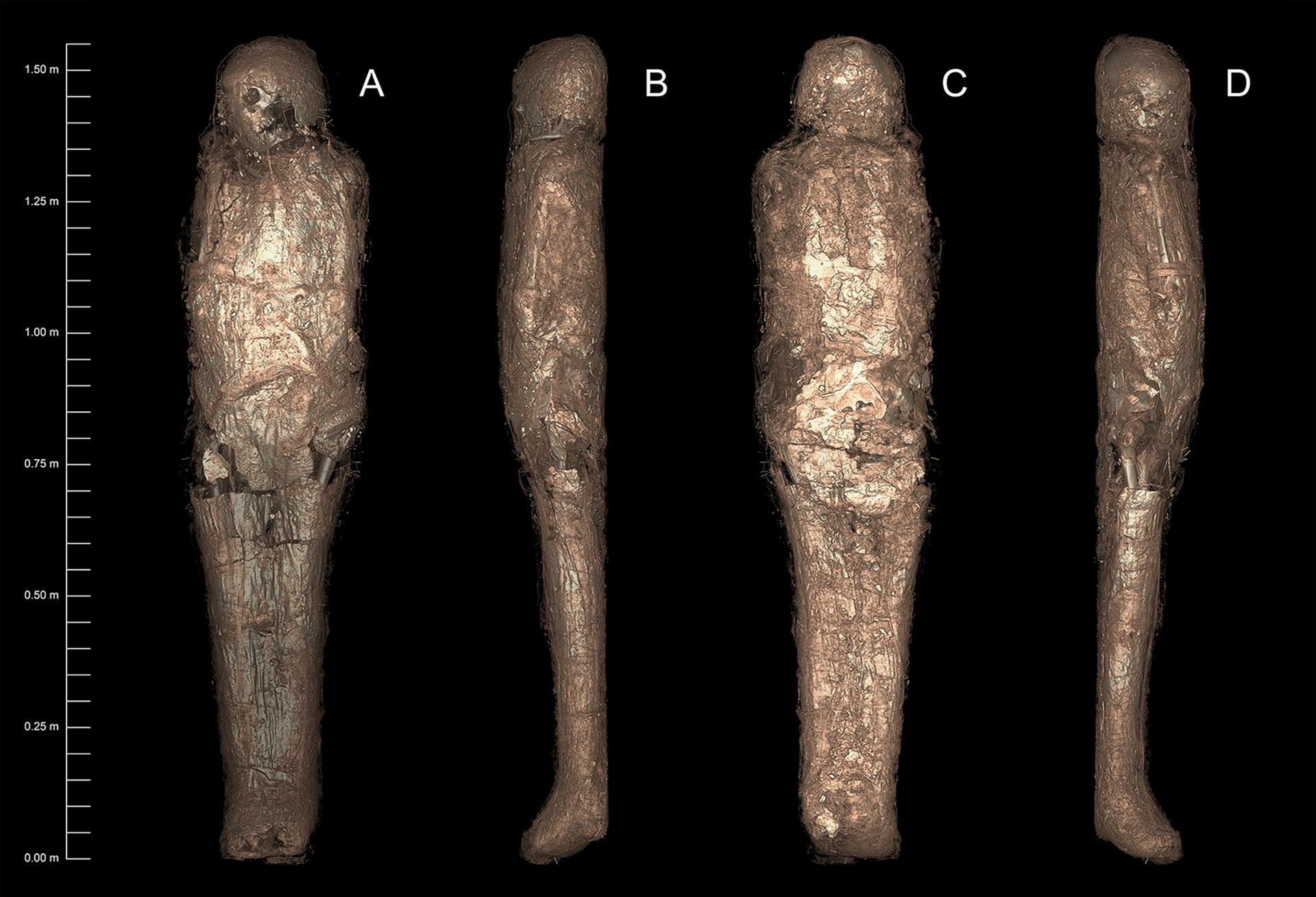 La momia envuelta en un caparazón de barro endurecido - Sputnik Mundo, 1920, 11.02.2021