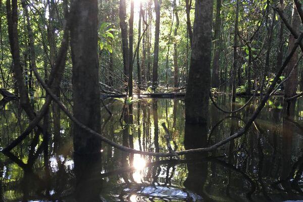 Reserva de Mamirauá (Brasil), espacio en el que investiga Michel André - Sputnik Mundo