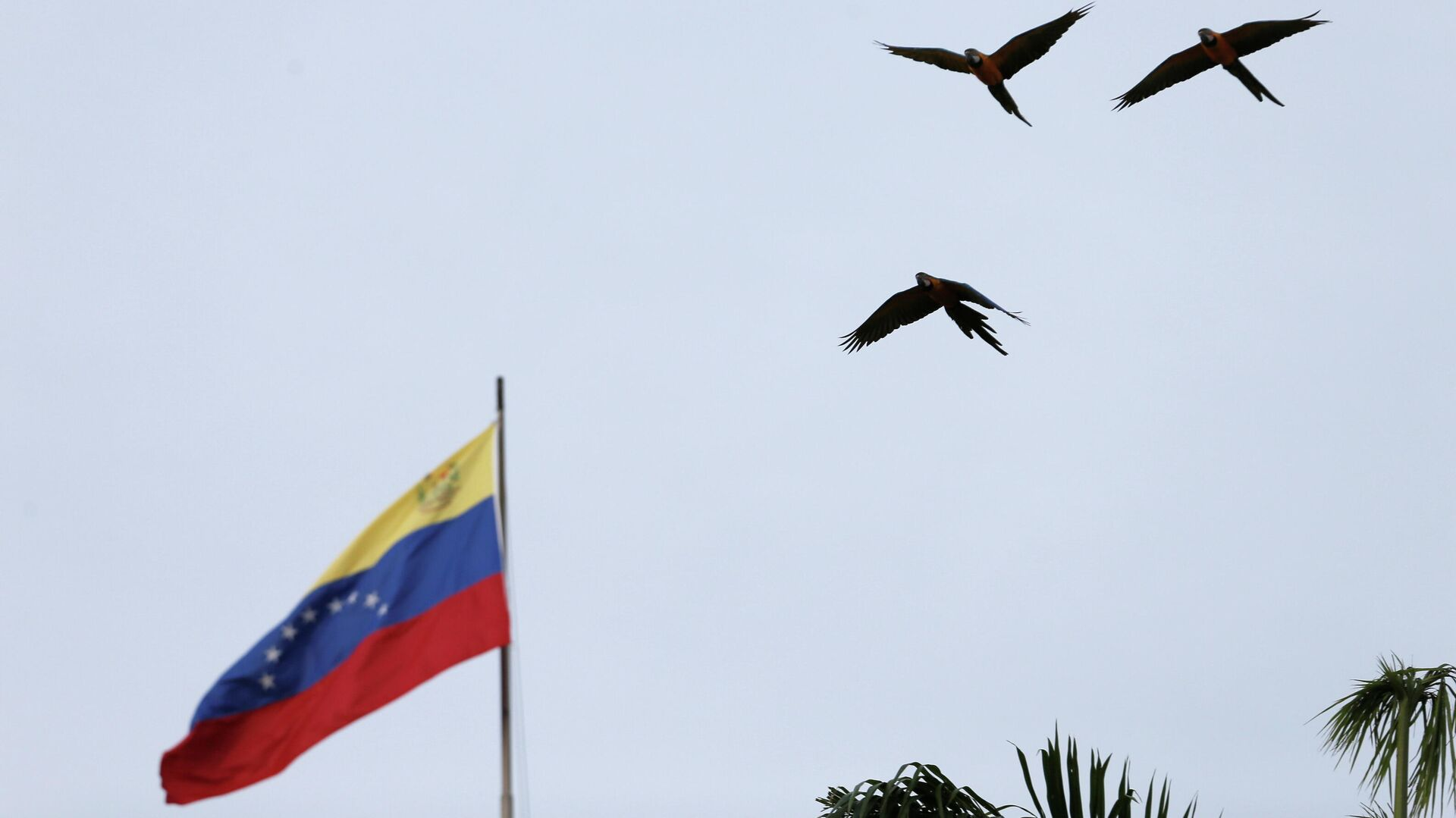 La bandera de Venezuela - Sputnik Mundo, 1920, 06.10.2021