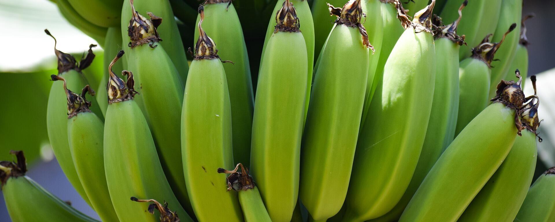 Bananas  - Sputnik Mundo, 1920, 26.04.2021