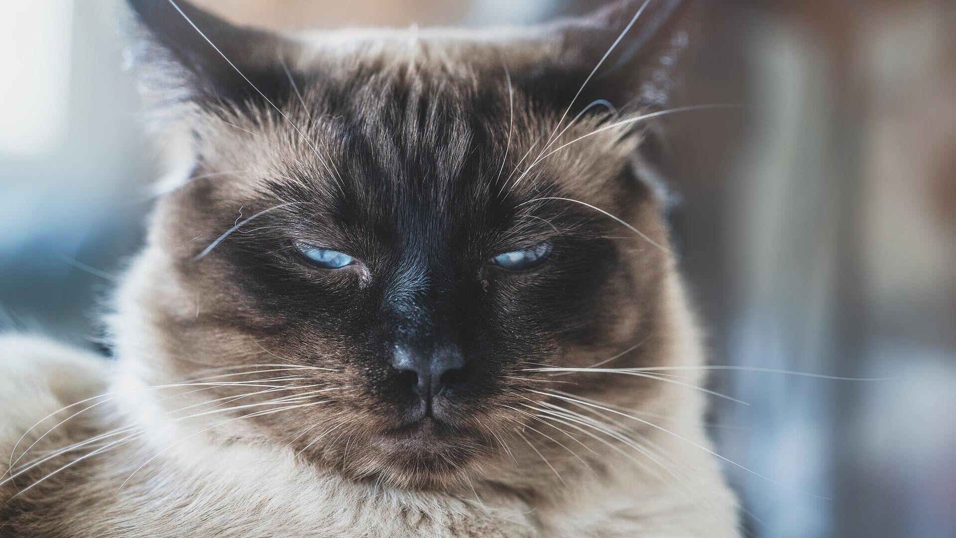 Un gato descontento - Sputnik Mundo, 1920, 04.03.2021