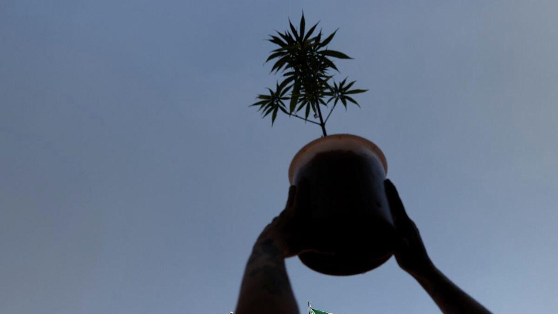 Un activista a favor de la marihuana legalizada sostiene una planta de cannabis durante una marcha en la ciudad de México, el 9 de marzo de 2021. - Sputnik Mundo, 1920, 10.03.2021