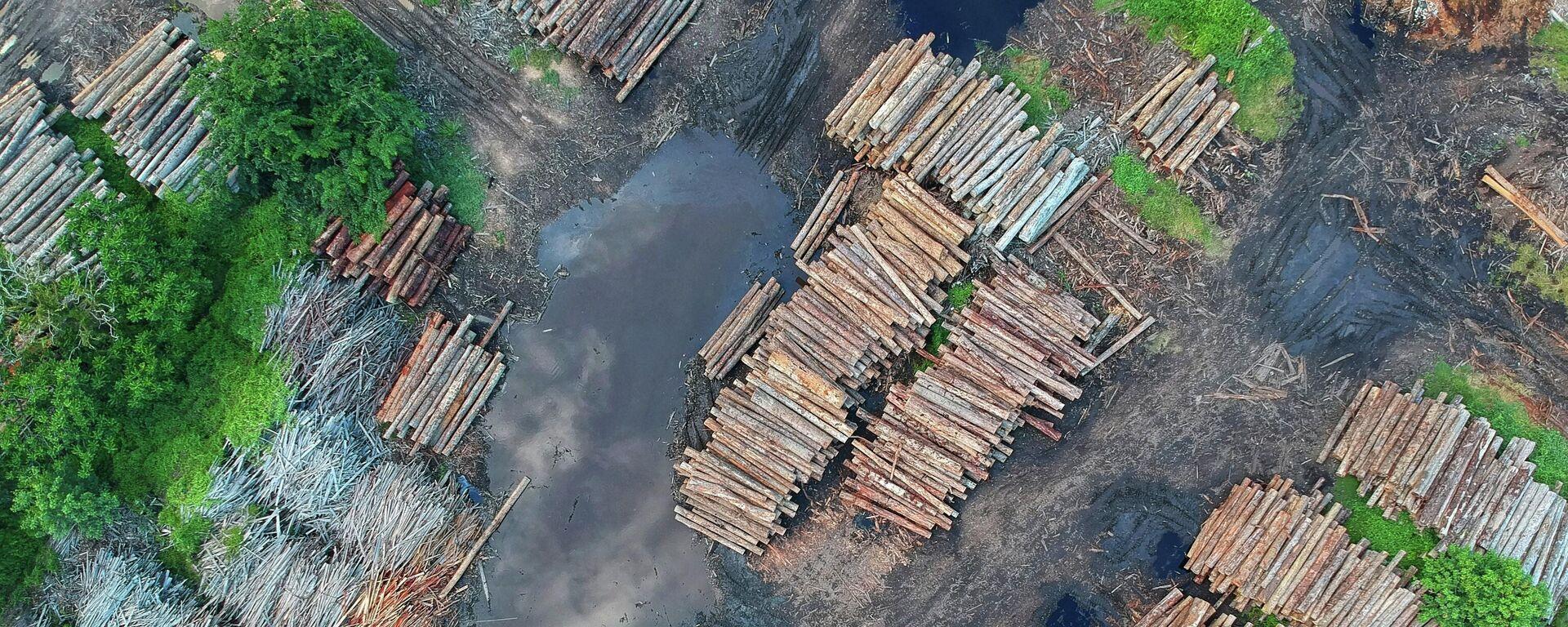 Deforestación, imagen referencial - Sputnik Mundo, 1920, 14.04.2021