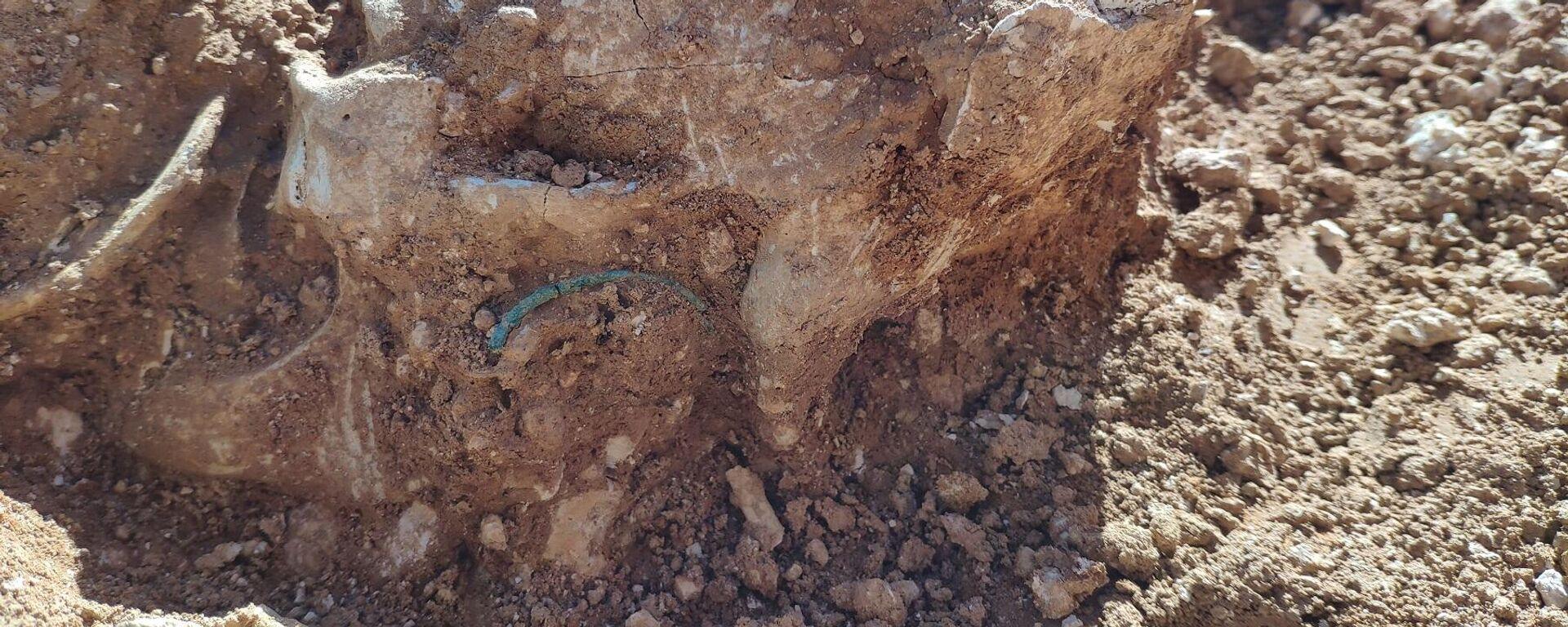 Se han encontrado por el momento 37 cráneos en Alcàsser - Sputnik Mundo, 1920, 02.06.2021