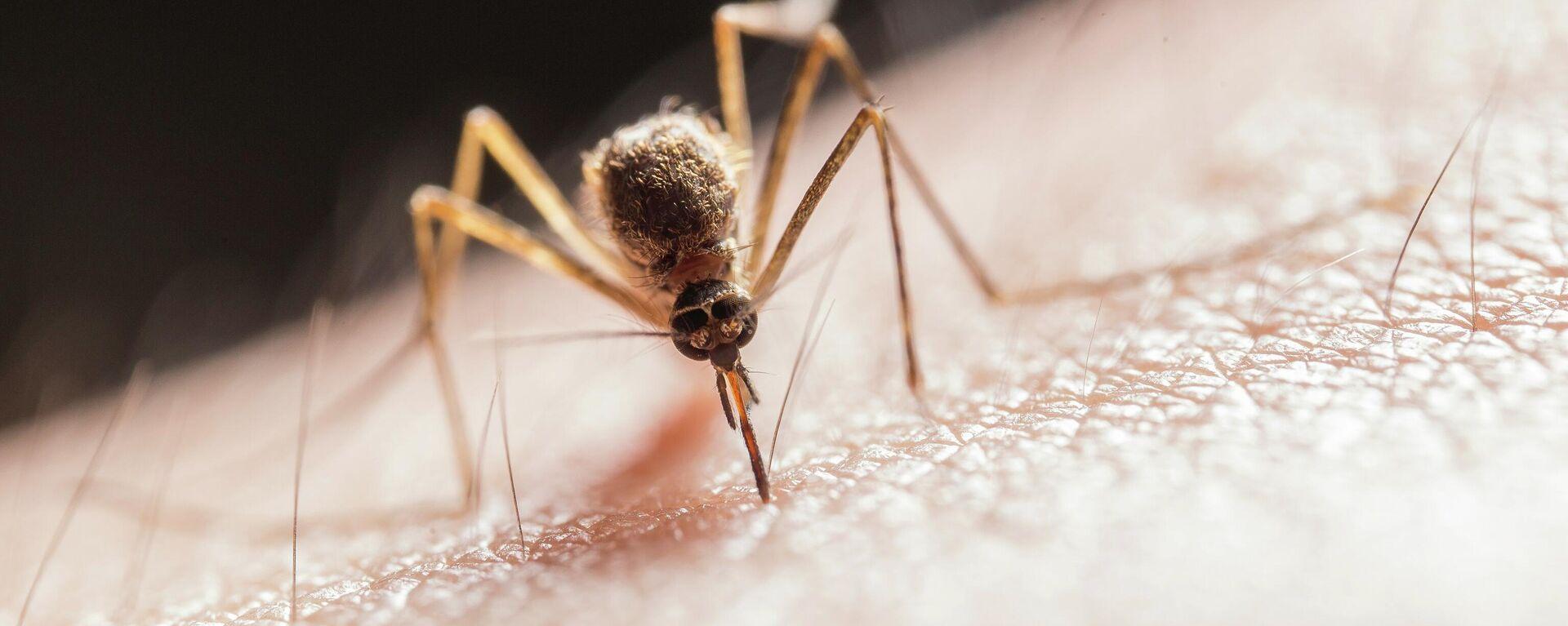 Un mosquito, imagen ilustrativa - Sputnik Mundo, 1920, 19.07.2021