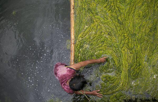 Un trabajador limpia algas en el estanque Kamal Pokhari en Katmandú (Nepal). - Sputnik Mundo