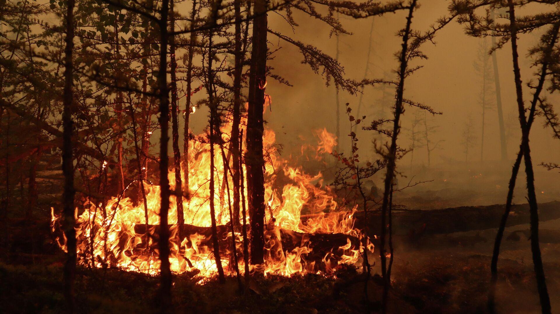 El incendio en un bosque cerca del pueblo de Magaras en la región de Yakutia, Rusia, el 17 de julio de 2021 - Sputnik Mundo, 1920, 02.08.2021