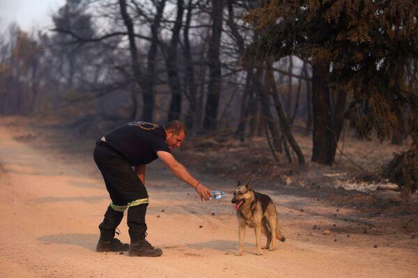 Un bombero le da de beber a un perro. - Sputnik Mundo