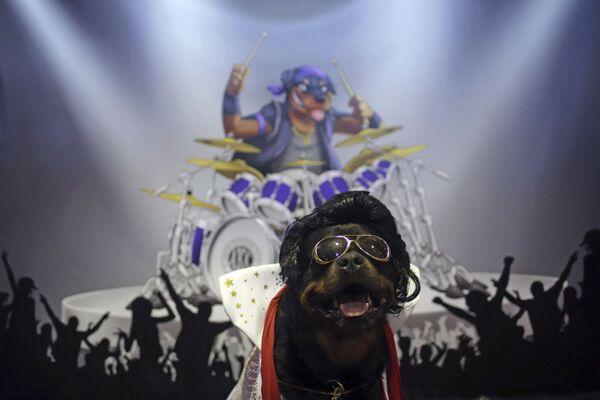 Poco después de su muerte, una fotografía del rey del rocanrol en su ataúd se filtró a la prensa. El ídolo muerto, sin embargo, no se parecía mucho a sí mismo, lo que dio origen a teorías de que se trataba, en realidad, de un muñeco de cera.En la foto: un perro disfrazado de Elvis participa de una feria de mascotas en Nueva York (EEUU) el 9 de febrero de 2019. - Sputnik Mundo