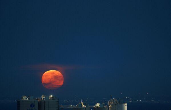La próxima luna azul, en el sentido de dos lunas llenas en el mismo mes, ocurrirá en aproximadamente dos años, el 31 de agosto de 2023.En la foto: la luna de esturión sobre la bahía de Tokio, en Tokio (Japón). - Sputnik Mundo