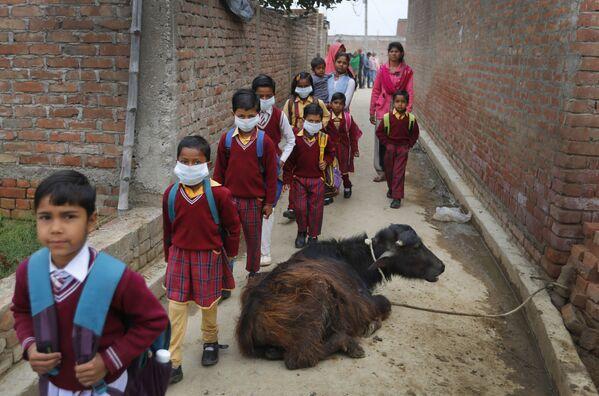 El uniforme escolar es obligatorio hasta la escuela secundaria en la India. - Sputnik Mundo