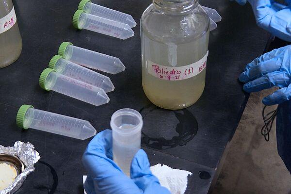 Investigadoras del Laboratorio de Ecología de Microorganismos de la UCV procesan muestras de aguas cloacales - Sputnik Mundo
