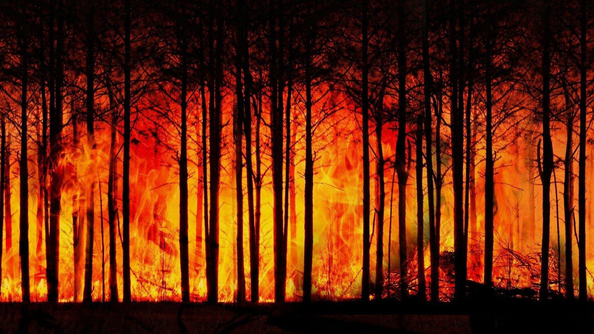 Incendios de 6ª Generación, un nuevo horizonte ecosistémico - Sputnik Mundo, 1920, 17.09.2021