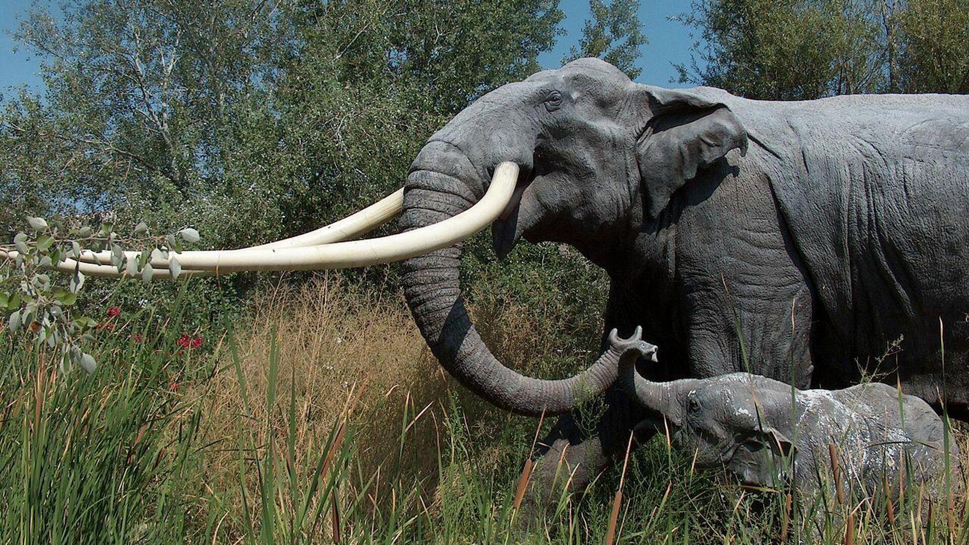 Palaeoloxodon antiquus - Sputnik Mundo, 1920, 18.09.2021