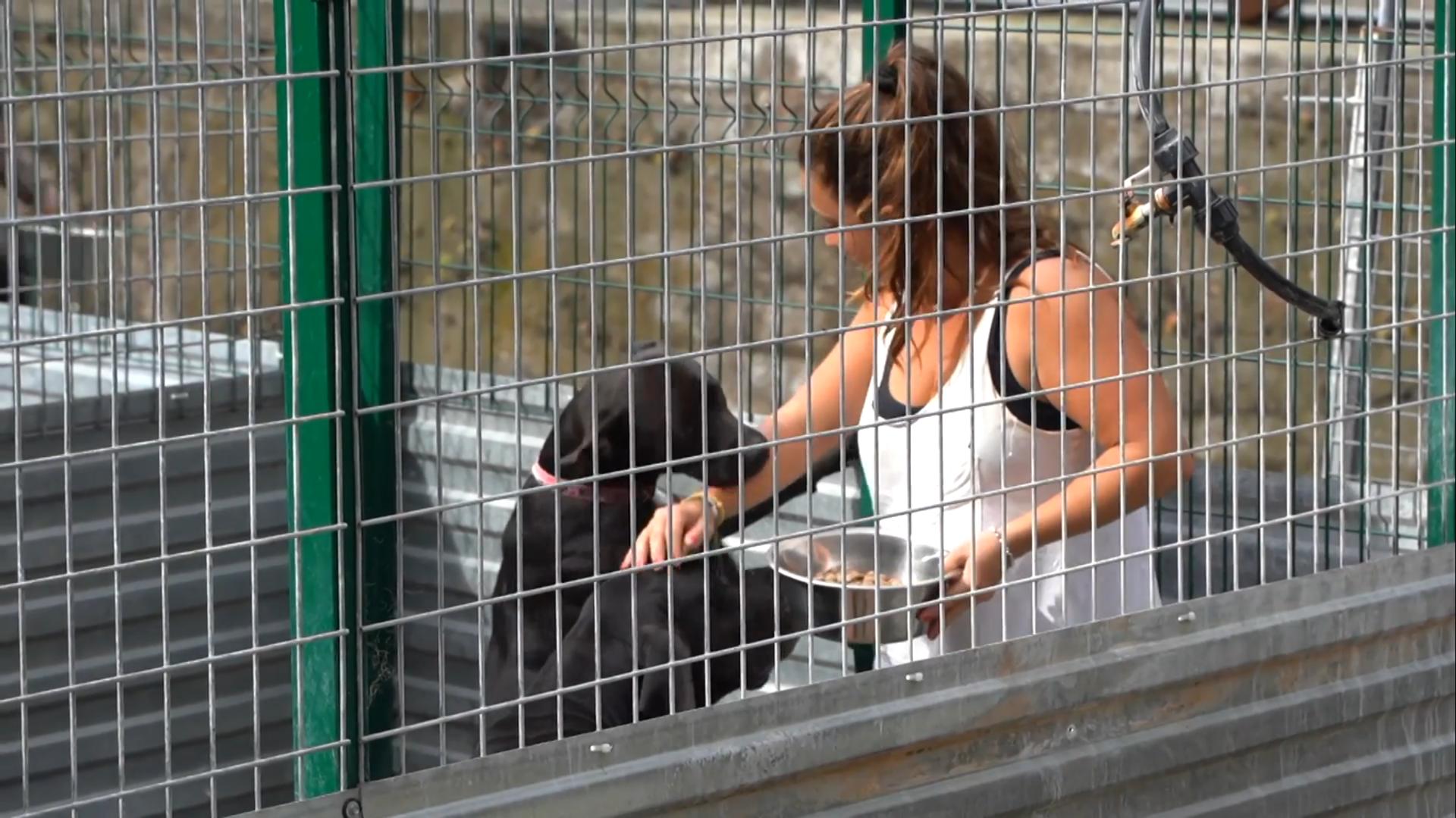 Los refugios de La Palma acogen a las mascotas que han podido rescatar de la lava - Sputnik Mundo, 1920, 22.09.2021
