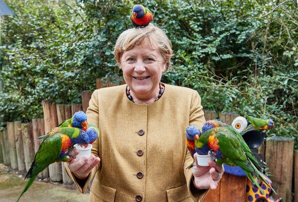 La canciller alemana Angela Merkel visita el Parque de las Aves de Marlow, en el norte de Alemania. - Sputnik Mundo