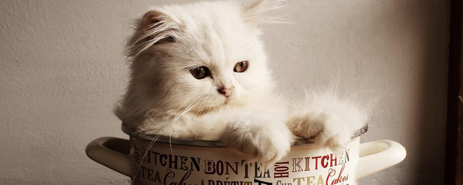 Un gato en la cocina - Sputnik Mundo, 1920, 26.09.2021