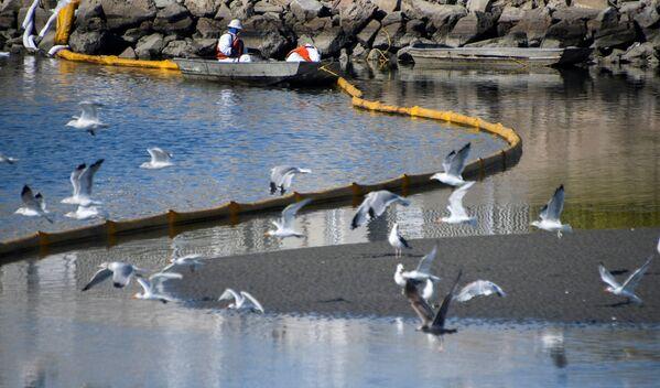 La enorme mancha vertida provocó la muerte de los animales marinos. El petróleo afectó la reserva ecológica de la región. - Sputnik Mundo