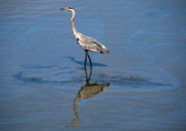 El anterior gran derrame ocurrió en el 2007. Entonces se vertió dos veces menos combustible, pero causó la muerte de casi 7.000 aves. Otra avería derramó casi 1,5 millones de litros de petróleo en 1990. - Sputnik Mundo