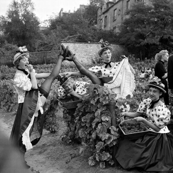 Unas bailarinas del Moulin Rouge en un viñedo de Montmartre, en 1953. - Sputnik Mundo