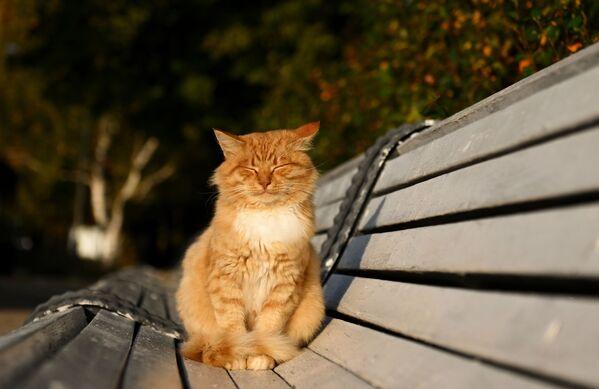 Un gato toma el sol en un banco de un parque moscovita. - Sputnik Mundo