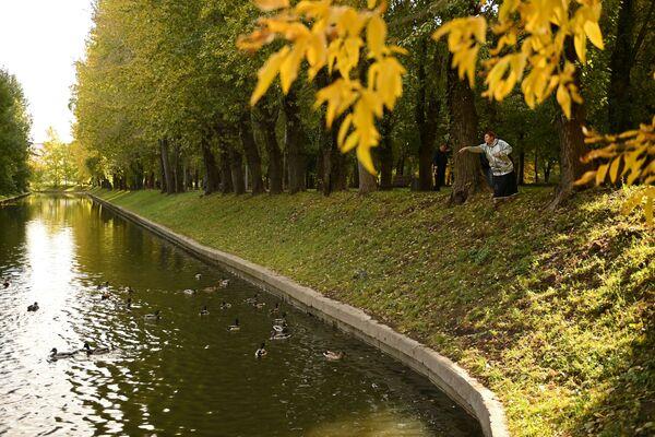 Una mujer alimenta a los patos en el parque Krasnaya Presnya en Moscú. - Sputnik Mundo