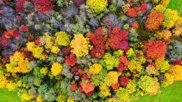 El otoño boreal muestra todo su colorido en la región rusa de Carelia. - Sputnik Mundo