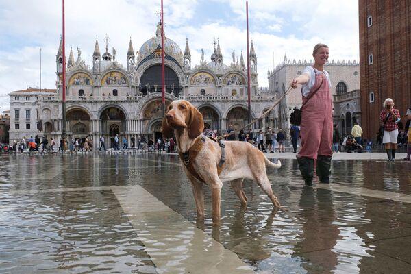 Una mujer y su perro caminan en inmediaciones de la inundada plaza de San Marcos de Venecia, en Italia. - Sputnik Mundo