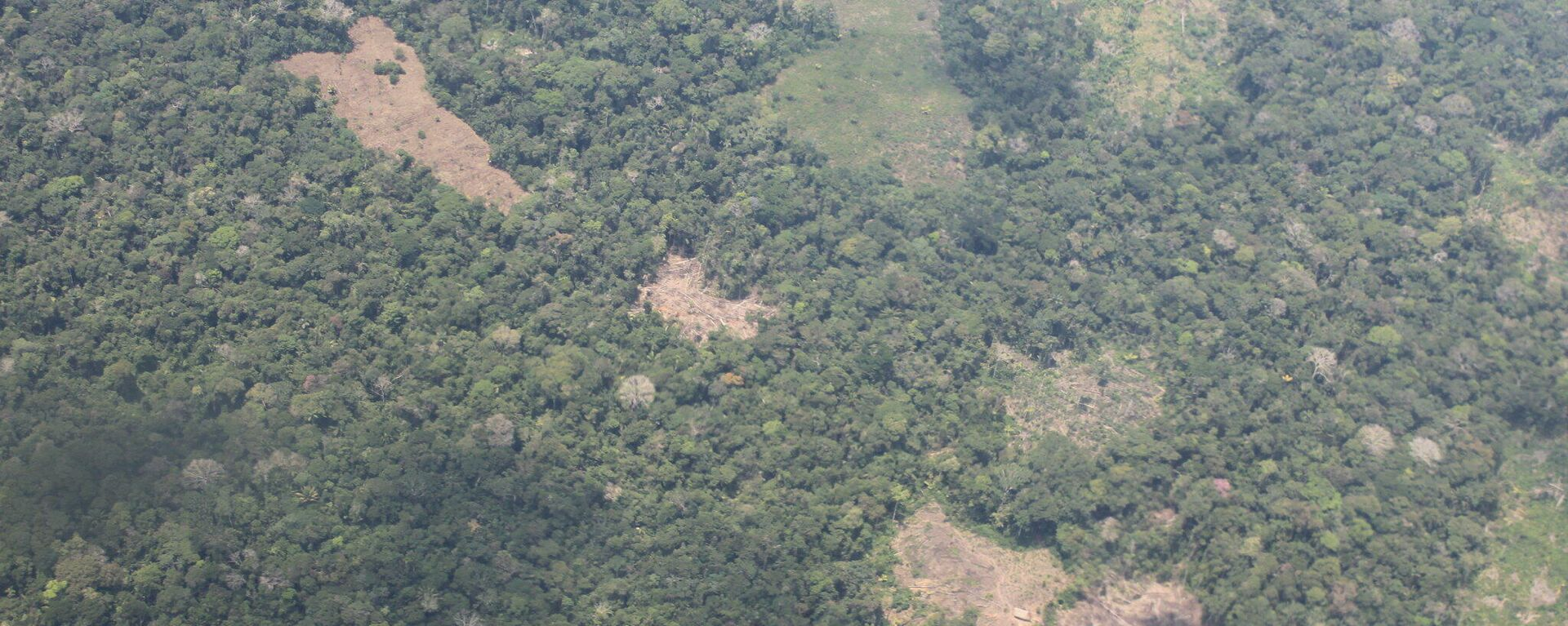 Deforestación en Loreto, Perú - Sputnik Mundo, 1920, 11.10.2021