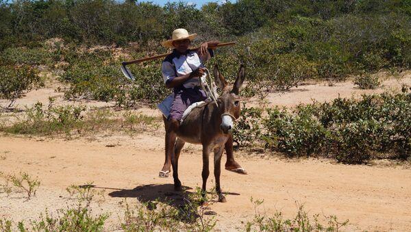 El 45% del área rural de Brasil continúa en manos de grandes propietarios latifundistas - Sputnik Mundo