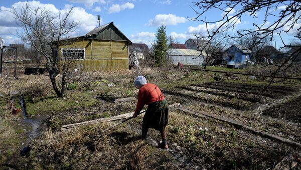 Diputados rusos proponen entregar tierras gratis para desarrollar territorios lejanos - Sputnik Mundo