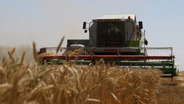 Cosecha de trigo en la región rusa de Krasnodar (Archivo) - Sputnik Mundo